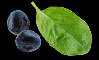 blueberry keto